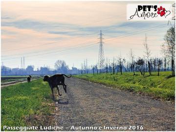 Pet's Amore; cani; Vettabbia